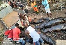 Photo of Photos: Nzema East MCE seizes smoked dolphins from fishmongers