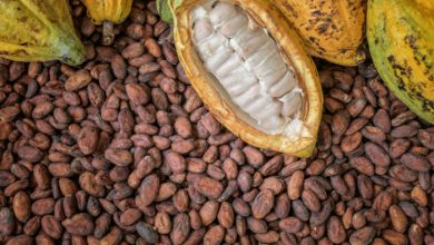 Photo of Ghana attains highest cocoa production in history