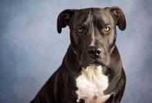 Photo of We want insurance, risk allowance against dog bites – 2021 Census enumerators