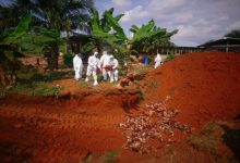 Photo of Bird Flu outbreak: Ban on movement of poultry products in Ashanti